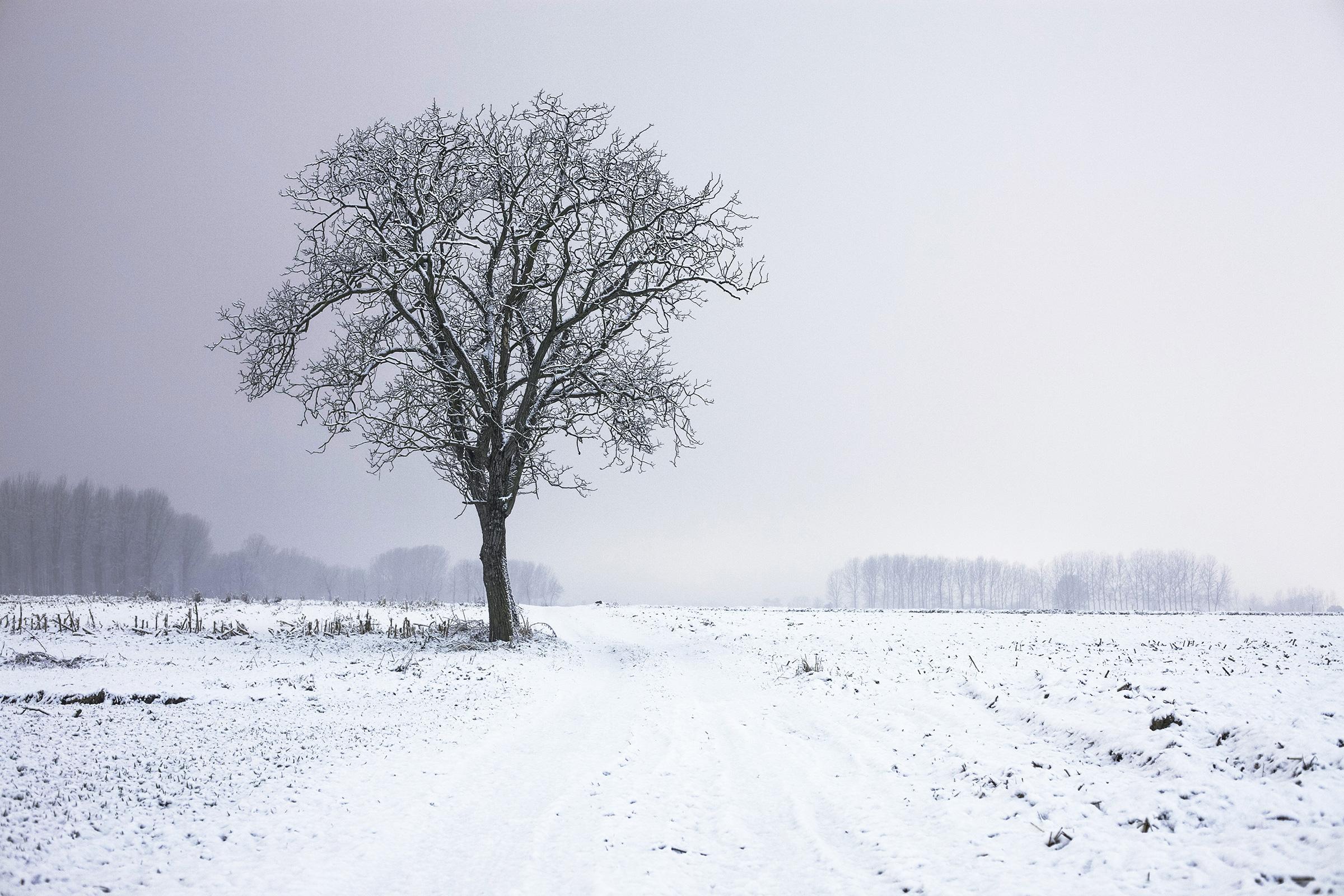 cold-snow-landscape-nature-1.jpg