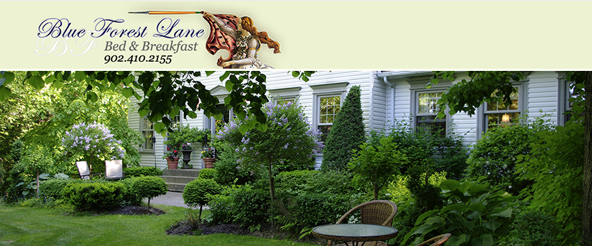 Blue Forest Lane Bed and Breakfast